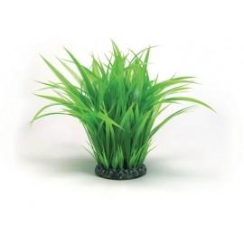 anillo-de-hierba-grande