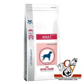 Adult Royal Canin
