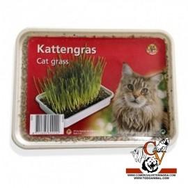 Hierba para gatos en bandeja (120 gr)